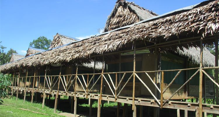 Amazonian untamed jungle tours - Photo 1