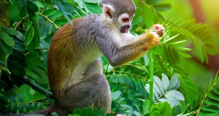 Amazonian untamed jungle tours - Photo 2