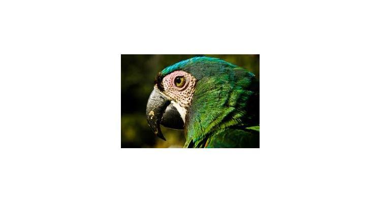 Amazonian untamed jungle tours - Photo 8