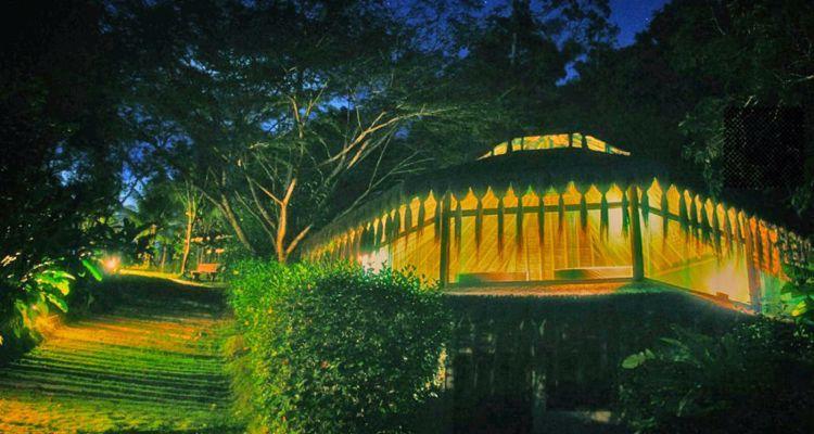 Spirit Vine  Ayahuasca Retreat - Photo 34
