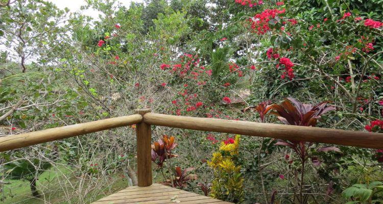 Spirit Vine  Ayahuasca Retreat - Photo 27