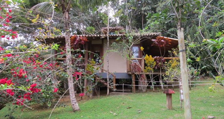 Spirit Vine  Ayahuasca Retreat - Photo 29