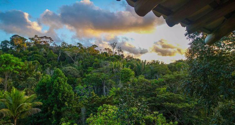 Spirit Vine  Ayahuasca Retreat - Photo 2