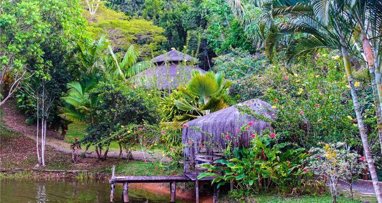 Spirit Vine  Ayahuasca Retreat - Photo 4