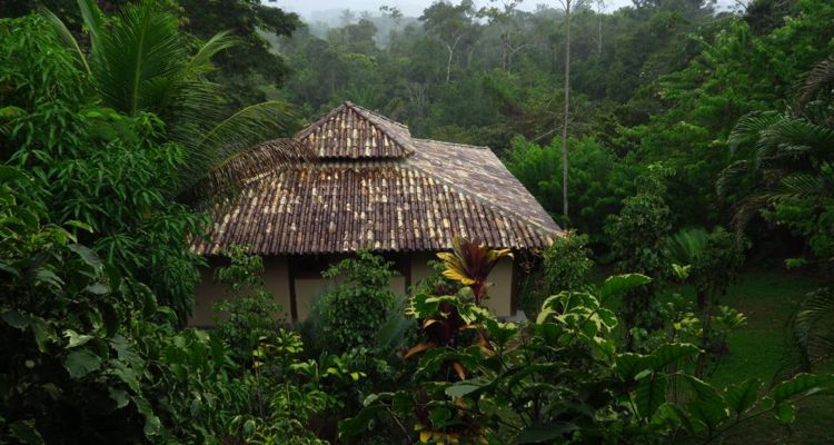 Spirit Vine  Ayahuasca Retreat - Photo 26