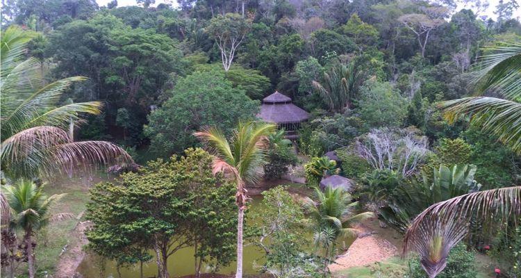 Spirit Vine  Ayahuasca Retreat - Photo 28