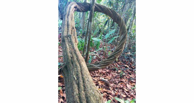 Spirit Vine  Ayahuasca Retreat - Photo 9