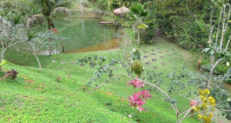 Spirit Vine  Ayahuasca Retreat - Photo 14