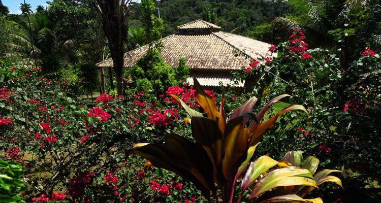 Spirit Vine  Ayahuasca Retreat - Photo 22