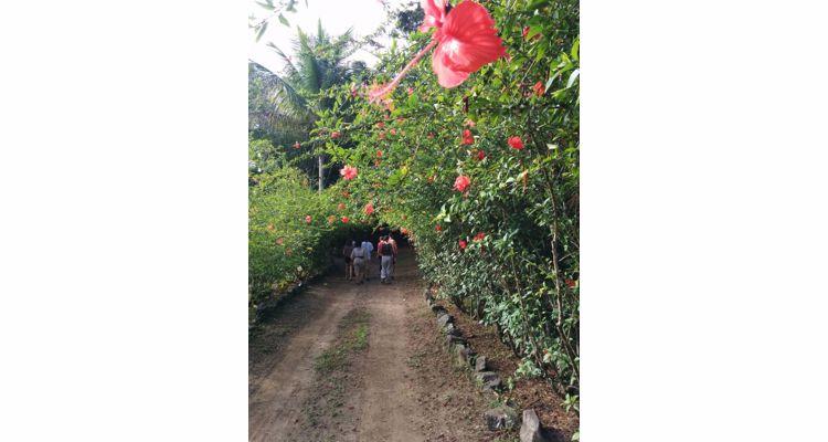 Spirit Vine  Ayahuasca Retreat - Photo 10