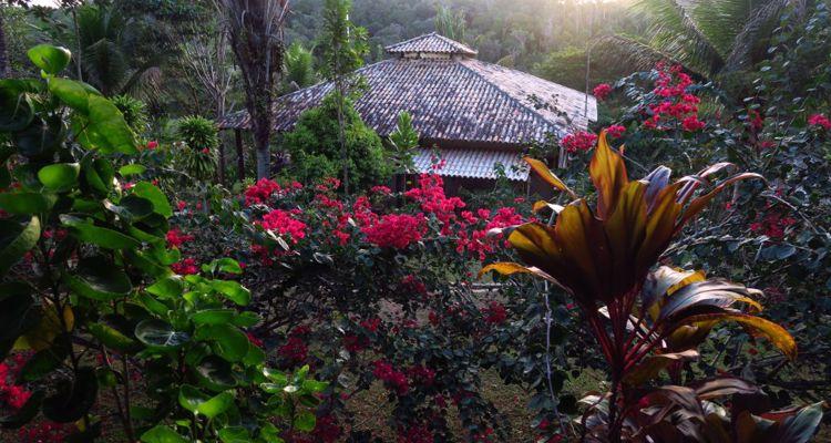 Spirit Vine  Ayahuasca Retreat - Photo 25