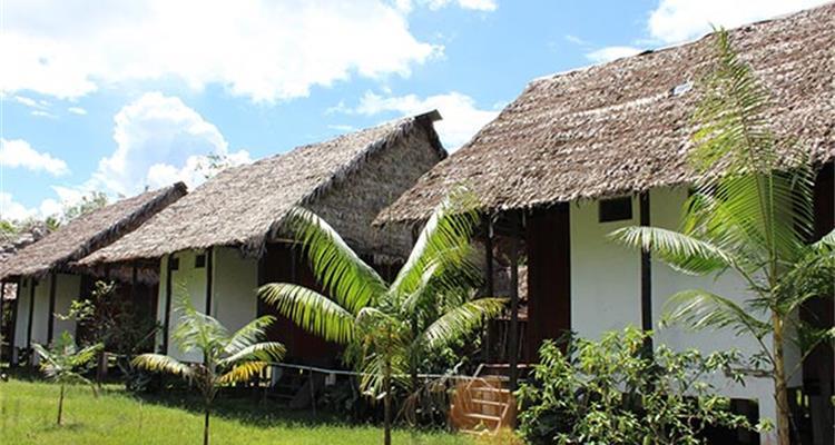 Ayahuasca Foundation - Photo 6