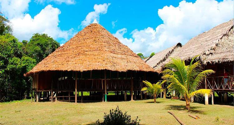 Ayahuasca Foundation - Photo 0