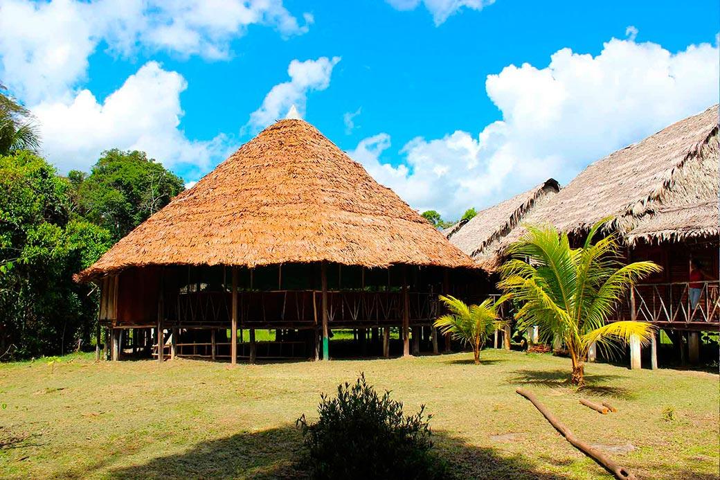 Ayahuasca Foundation