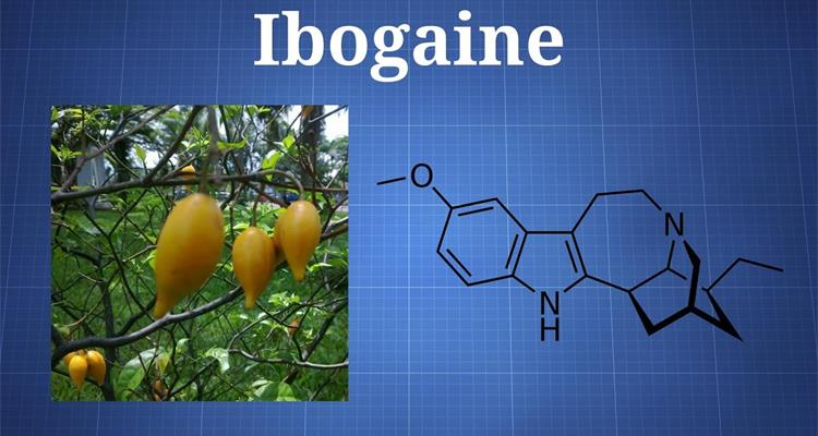 Iboga Remedy - Photo 12